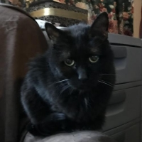 Easily adopt Sarah at :shelter_name and be a part of the pet adoption, animal rescue and welfare movement.
