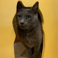 Easily adopt Puff G at Peninsula Humane Society & SPCA and be a part of the pet adoption, animal rescue and welfare movement.