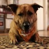 Easily adopt Ariel at :shelter_name and be a part of the pet adoption, animal rescue and welfare movement.