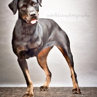Easily adopt Pilar at :shelter_name and be a part of the pet adoption, animal rescue and welfare movement.