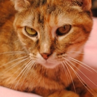 Easily adopt MARIGOLD at The Humane Society of Dallas and be a part of the pet adoption, animal rescue and welfare movement.