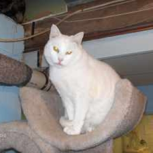 76fafc29b4 Easily adopt Sophie at Angel Pets Animal Welfare Society