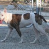 Easily adopt River at :shelter_name and be a part of the pet adoption, animal rescue and welfare movement.