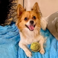 Easily adopt Miley at :shelter_name and be a part of the pet adoption, animal rescue and welfare movement.