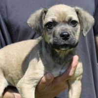 Easily adopt Survivor 33809 at Prattville Autauga Humane Society and be a part of the pet adoption, animal rescue and welfare movement.