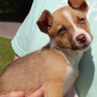 Easily adopt Wyland 33927 at Prattville Autauga Humane Society and be a part of the pet adoption, animal rescue and welfare movement.