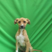Easily adopt Roxy1 at :shelter_name and be a part of the pet adoption, animal rescue and welfare movement.