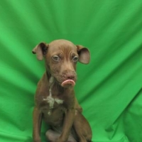 Easily adopt Trixie at :shelter_name and be a part of the pet adoption, animal rescue and welfare movement.
