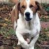 Easily adopt BUDDY at :shelter_name and be a part of the pet adoption, animal rescue and welfare movement.