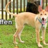 Easily adopt Steffen from Taiwan at Ginger's pet rescue and be a part of the pet adoption, animal rescue and welfare movement.