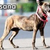 Easily adopt Rosana from Taiwan at Ginger's pet rescue and be a part of the pet adoption, animal rescue and welfare movement.