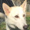 Easily adopt Caspien at Dog Star Rescue and be a part of the pet adoption, animal rescue and welfare movement.