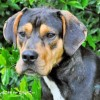 Easily adopt Springsteen at :shelter_name and be a part of the pet adoption, animal rescue and welfare movement.