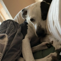 Easily adopt Reya at :shelter_name and be a part of the pet adoption, animal rescue and welfare movement.