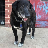 Easily adopt Bobo at :shelter_name and be a part of the pet adoption, animal rescue and welfare movement.