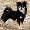 Easily adopt Bear at :shelter_name and be a part of the pet adoption, animal rescue and welfare movement.
