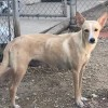 Easily adopt Chloe 0740 at :shelter_name and be a part of the pet adoption, animal rescue and welfare movement.