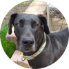 Easily adopt Rizzo at Just Giants Rescue Inc. and be a part of the pet adoption, animal rescue and welfare movement.