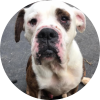 Easily adopt Paul at Newman Nation: Senior Pets United and be a part of the pet adoption, animal rescue and welfare movement.