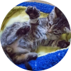Easily adopt Tabby at Animals for Awareness and be a part of the pet adoption, animal rescue and welfare movement.