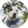 Easily adopt Ralphie at Dogs are Deserving Rescue and be a part of the pet adoption, animal rescue and welfare movement.