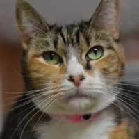 Easily adopt Georgette 10511 at Furkids, Inc.  and be a part of the pet adoption, animal rescue and welfare movement.