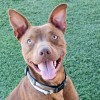 Easily adopt Max at Agoura Animal Care Center and be a part of the pet adoption, animal rescue and welfare movement.