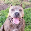 Easily adopt Lacy at Agoura Animal Care Center and be a part of the pet adoption, animal rescue and welfare movement.